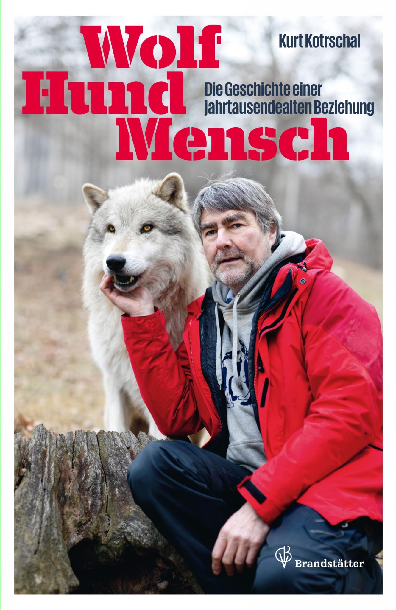 kampf wolf gegen hund