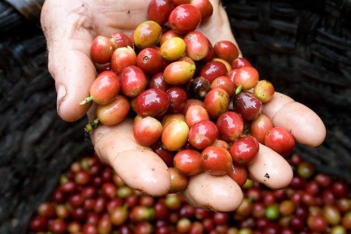 Kaffee_Costa Rica_2008_Coocafe_Stefan Lechner_02