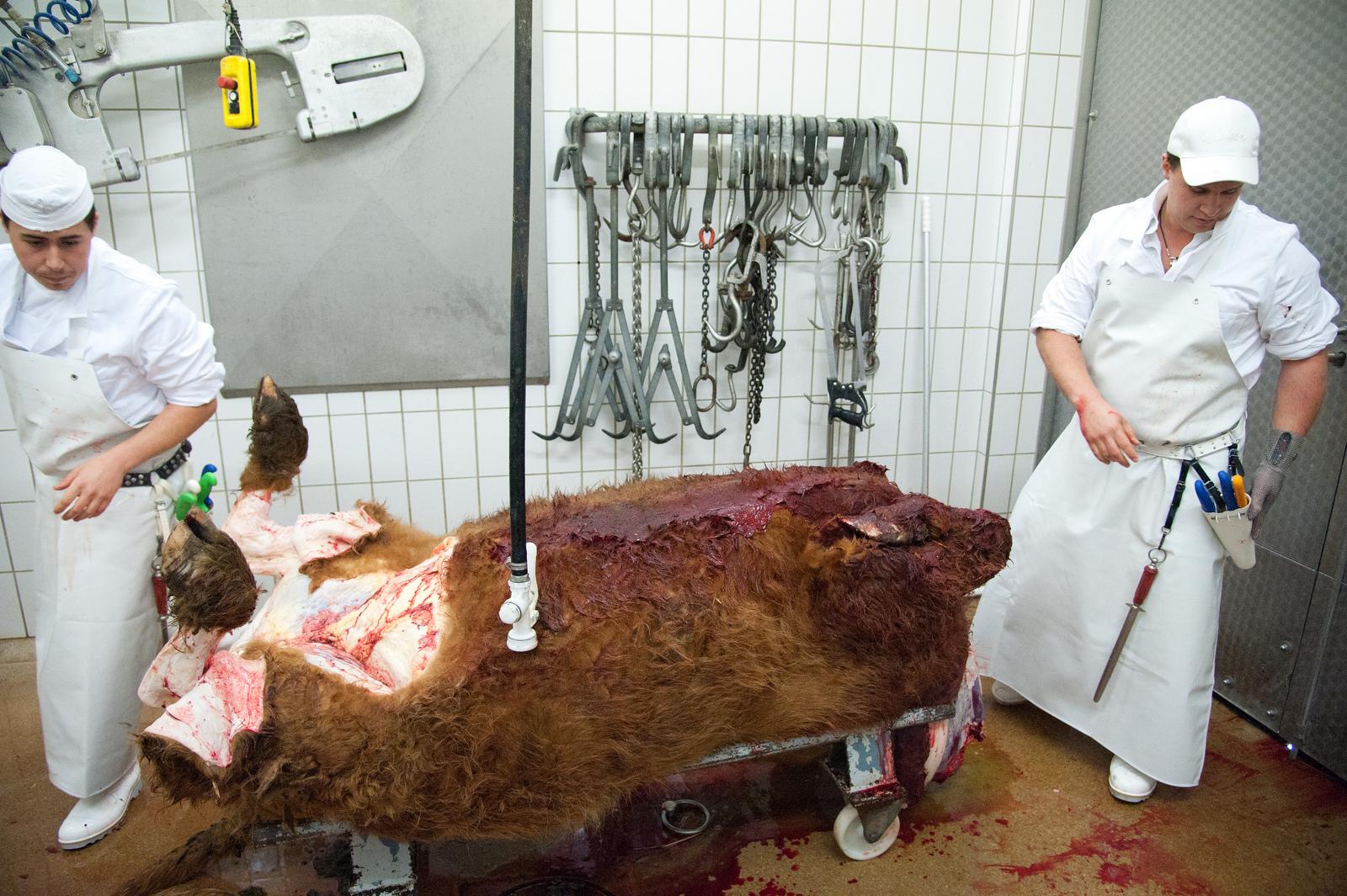 Torso der Kuh, Bild: Jürgen Schmücking
