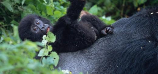 Bild: Martin Harvey/WWF-Canon
