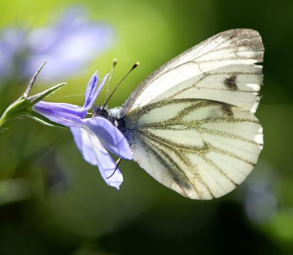 Die woche der artenvielfalt in den garten tulln for Natur im garten