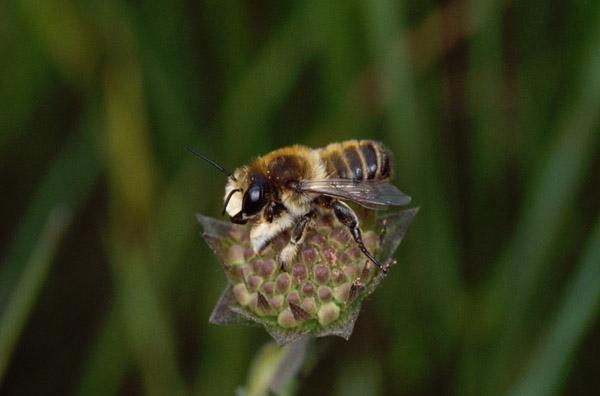 insektenhotel aus dosen basteln nisthilfe f r wildbienen. Black Bedroom Furniture Sets. Home Design Ideas