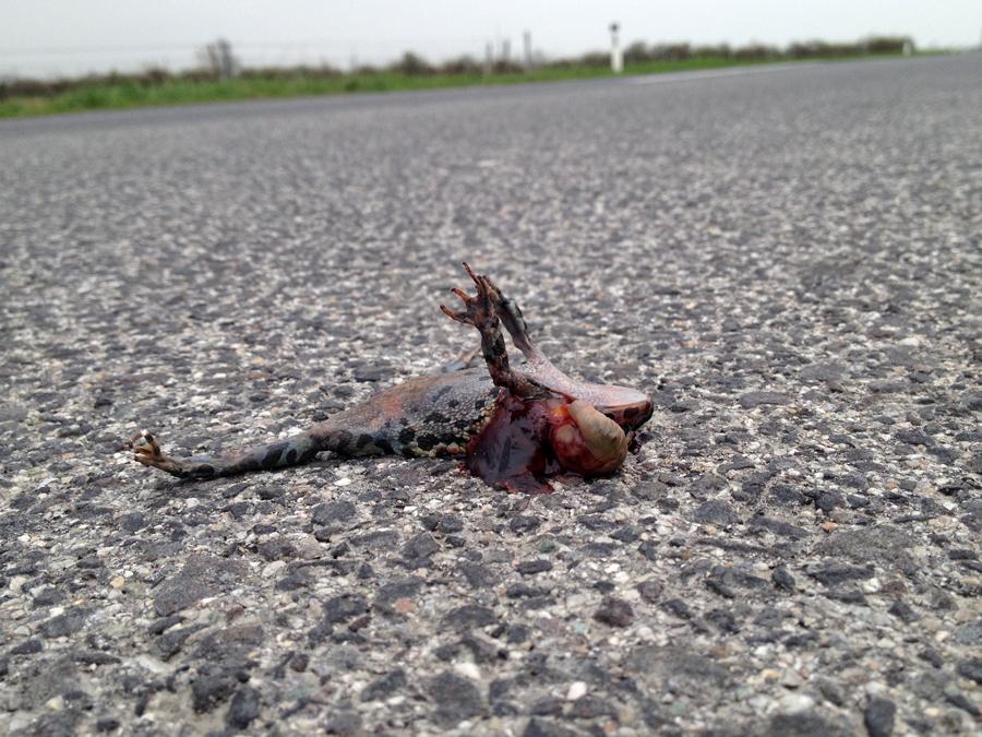 Fashion Roadkill Blog