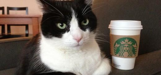Was wohl die Katze zur Starbucketchallenge meint? (Bild: flickr.com/Mr. TinDC/CC BY-NC-ND 2.0