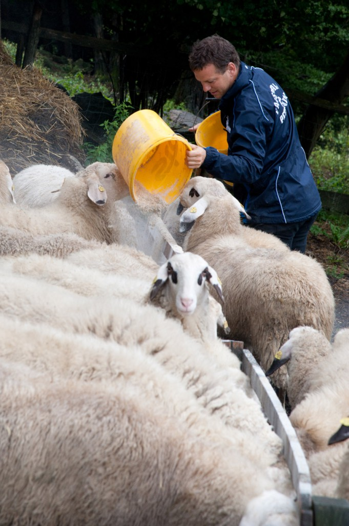 """Werden die Schafe im Nachbarort mit Sojaschrot aus Südamerika gefüttert, dann ist der Käse kein """"regionales"""" Erzeugnis mehr.  Bild: Jürgen Schmücking"""