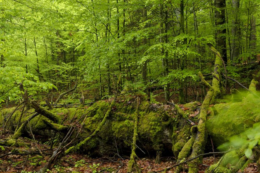 Deutschland Urwald