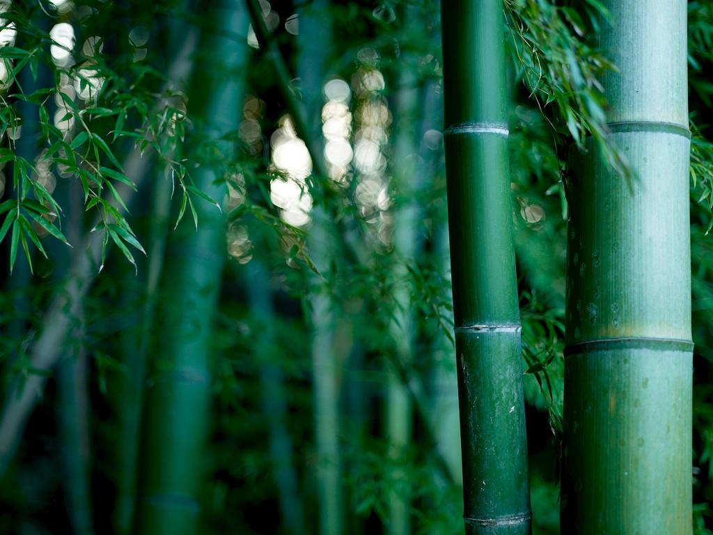 Kunststoffersatz 8 schöne Dinge aus Bambus