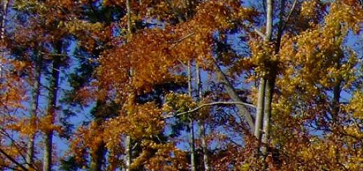 Pole – Wald, Foto: Pole