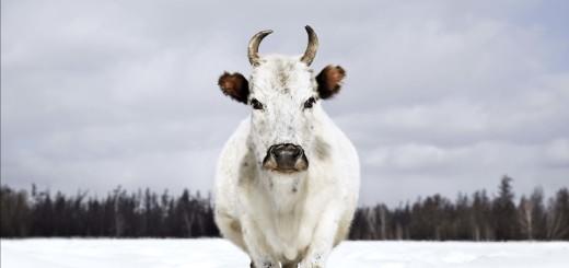 In ihrer Heimat Jakutien (Russland) gibt es im Laufe eines Jahres schon einmal Temperaturunterschiede  von über 100 Grad Celsius: Sacha Ynaga machte selbst den Nordosten Sibiriens besiedelbar