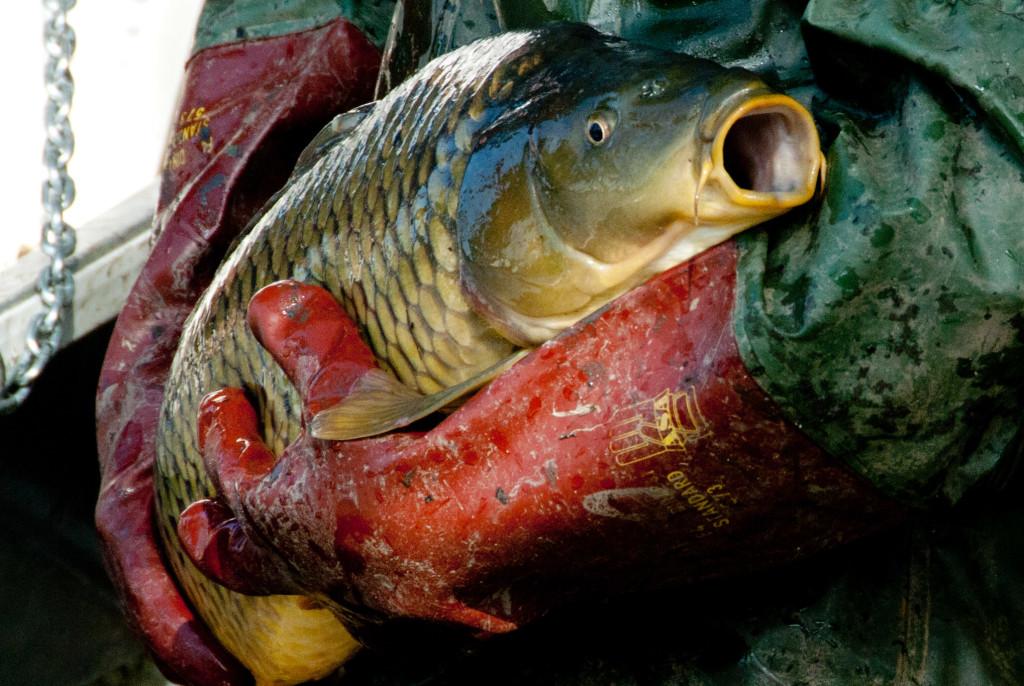 Was thun fisch biorama for Fisch bilder