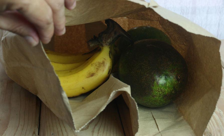avocados richtig lagern sch len und einpflanzen biorama. Black Bedroom Furniture Sets. Home Design Ideas