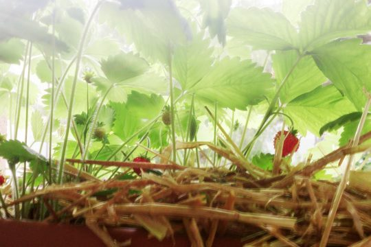 Fruchtfliegen ade 6 tipps gegen die invasion biorama for Fruchtfliegen pflanzen