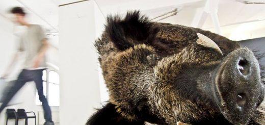 Ein Wildschwein gehört zur Deko beim zweiten Bio-Wissensmarkt. (Bild: FiBL)