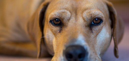 Gerade Hunde sind anfällig für einen Fadenwurmbefall (Bild: Ralph Arvesen / CC BY-SA 2.0)