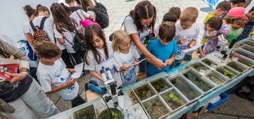 Am Danube Day steht Action am Programm: Jedes Jahr lassen sich die unterschiedlichen Länder ein vielfältiges Programm einfallen, mit dem Neugier und Abenteuerlust gestillt werden. Und ganz nebenbei kann man auch etwas über die Donau lernen.