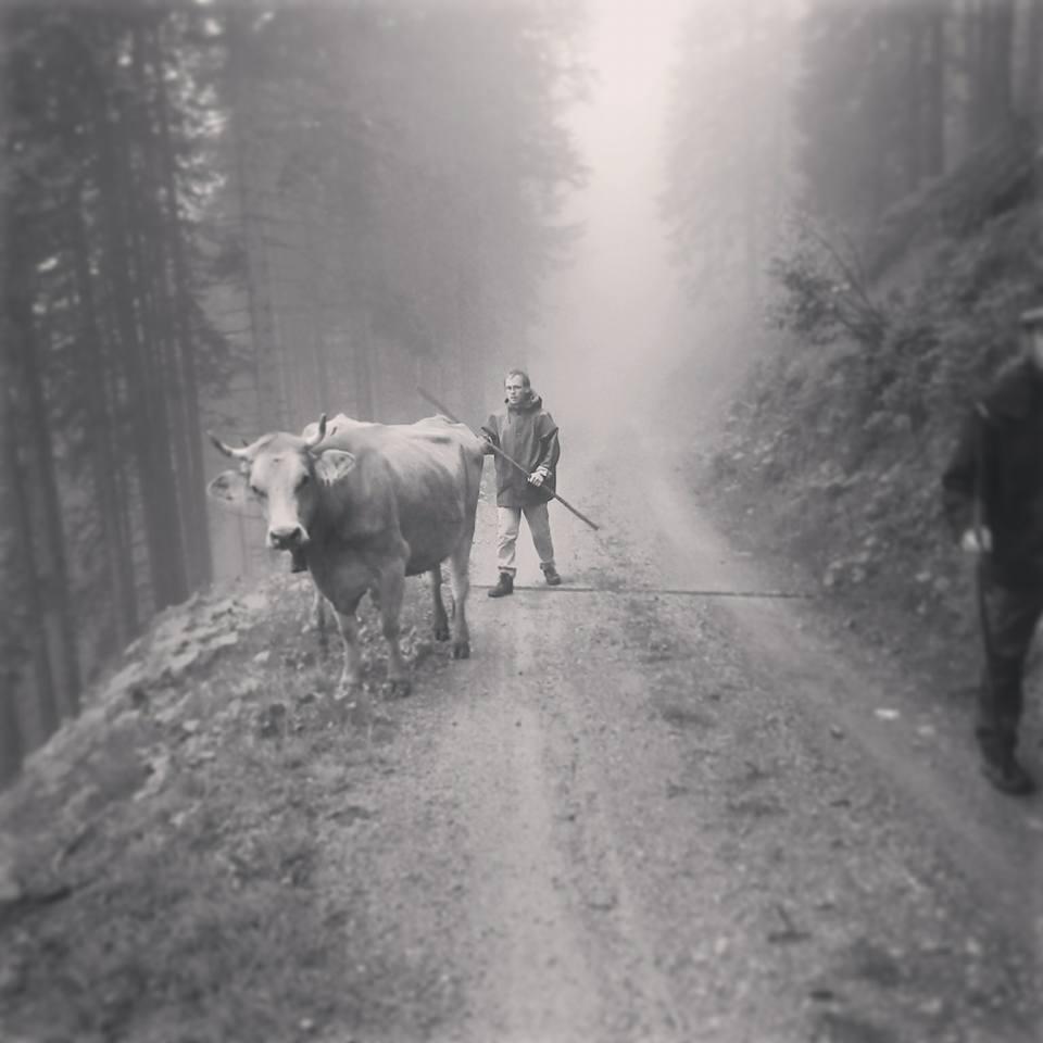 Frühsommer im Ländle: die Rinder des Vetterhofs auf dem Weg vom Tal hinauf auf die Alp. Trotz S/W keine historische Aufnahme, sondern aus dem Juni 2016. (Foto: Vetterhof)