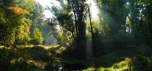 Spätsommer im Auwald, hier: entlang der Donau in Österreich im Nationalpark Donau-Auen. (Foto: Kern/NP Donau-Auen)