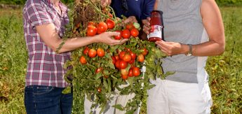 s ditalien in flaschen wo die besten tomaten wachsen. Black Bedroom Furniture Sets. Home Design Ideas
