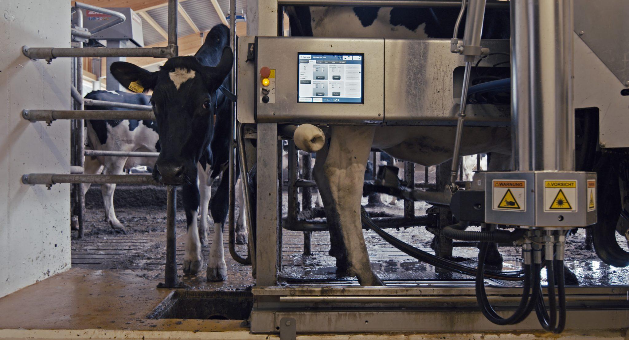 Moderner Melkstand am Hof von Fritz Grojer. Die Automatisierung schreitet voran, auch in der Nutztierhaltung. (Foto: Allegro Film)