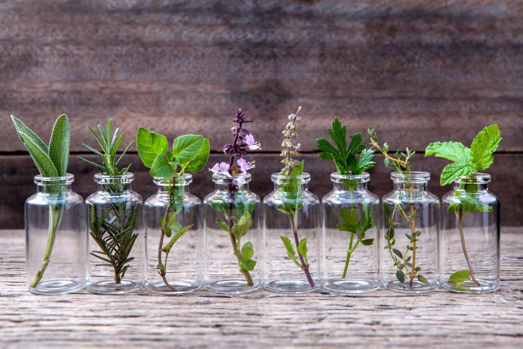 Atemberaubend Essbare Wildpflanzen bestimmen für Anfänger | BIORAMA &LR_97