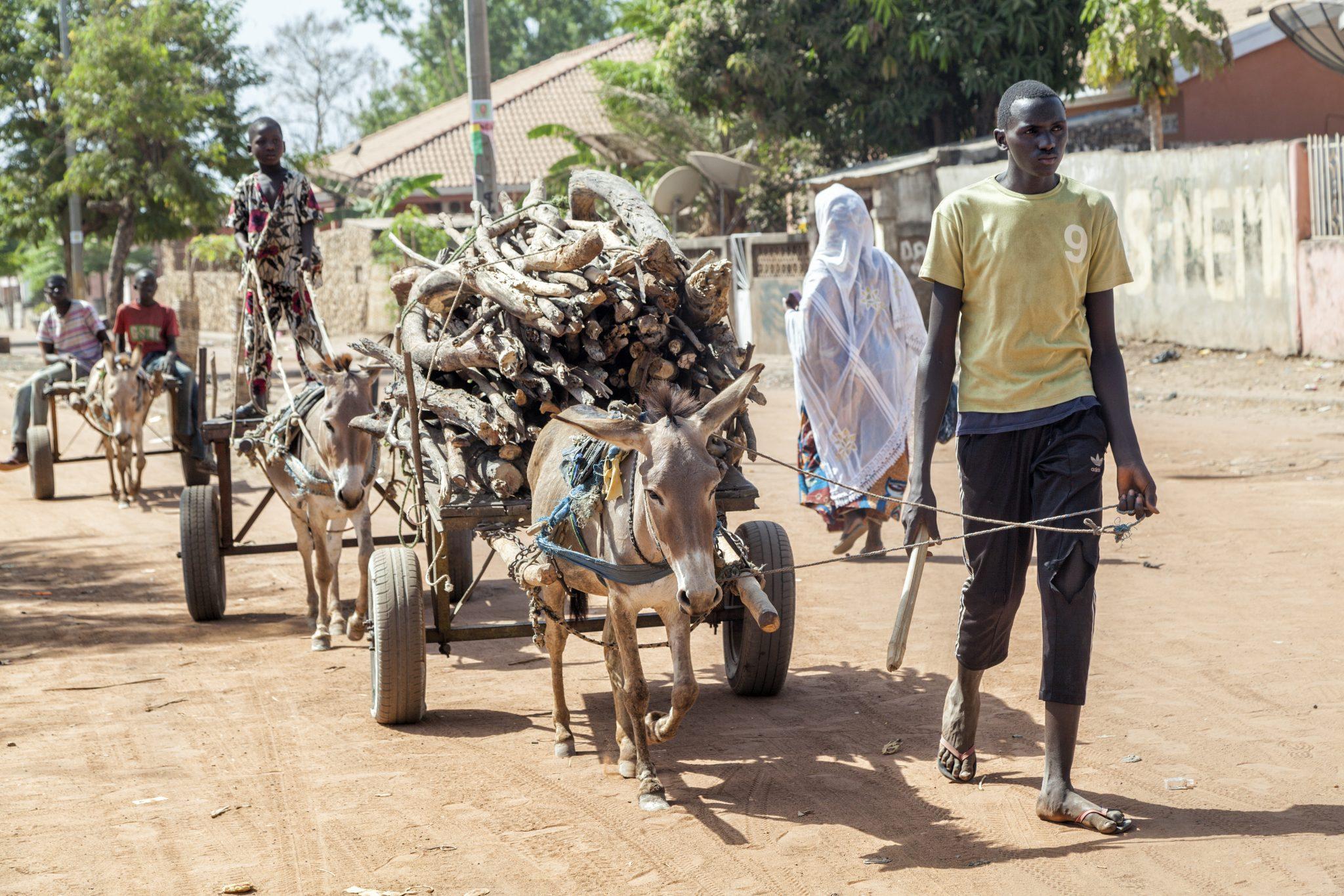 Esel Westafrika Transportmittel