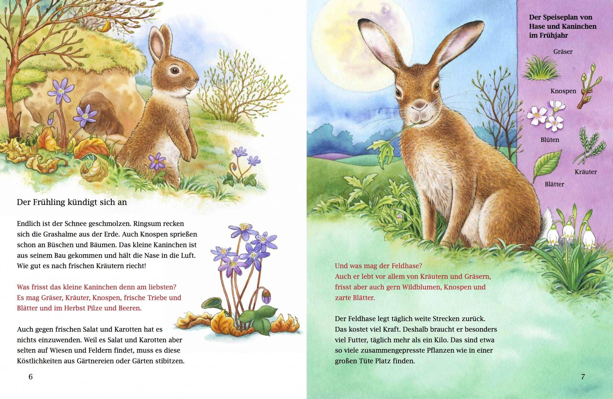 Von Häschen, Kaninchen und Küken   BIORAMA