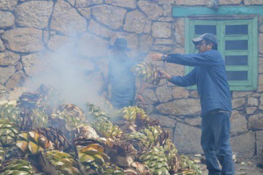 Für die Herstellung von Mezcal braucht man nur die Agavenherzen.