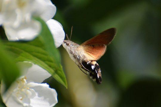 In Österreich sind in etw 4.000 Schmetterlingsarten beheimatet.