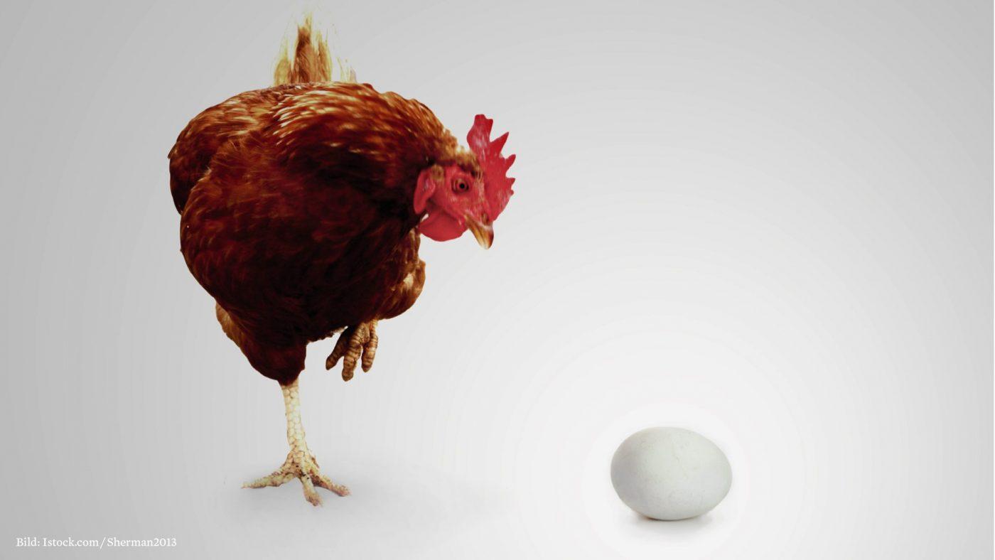 Warum Legen Hühner Ei