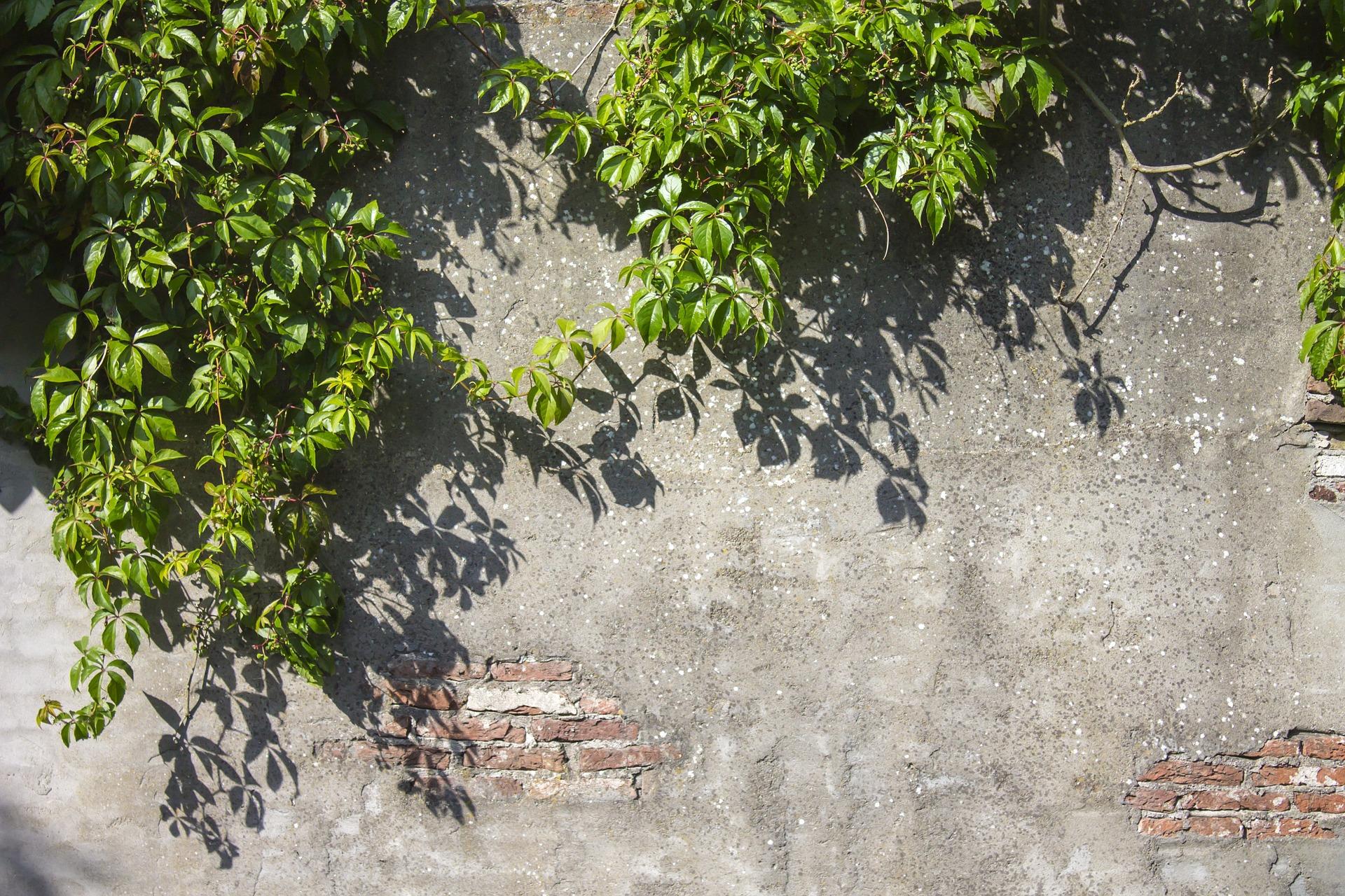 Dach- und Fassadenbegrünungen wirken »fiebersenkend« für den überhitzten Stadtkörper. Bild: Ben Scherjon, Pixabay.